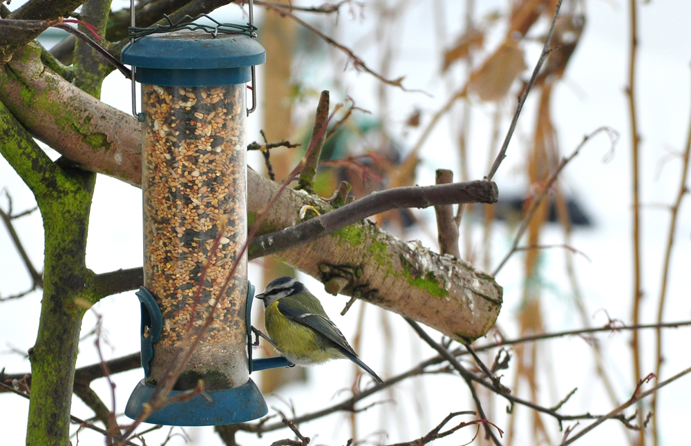 zoom the feeders feed expensive feeder birds bird of types and