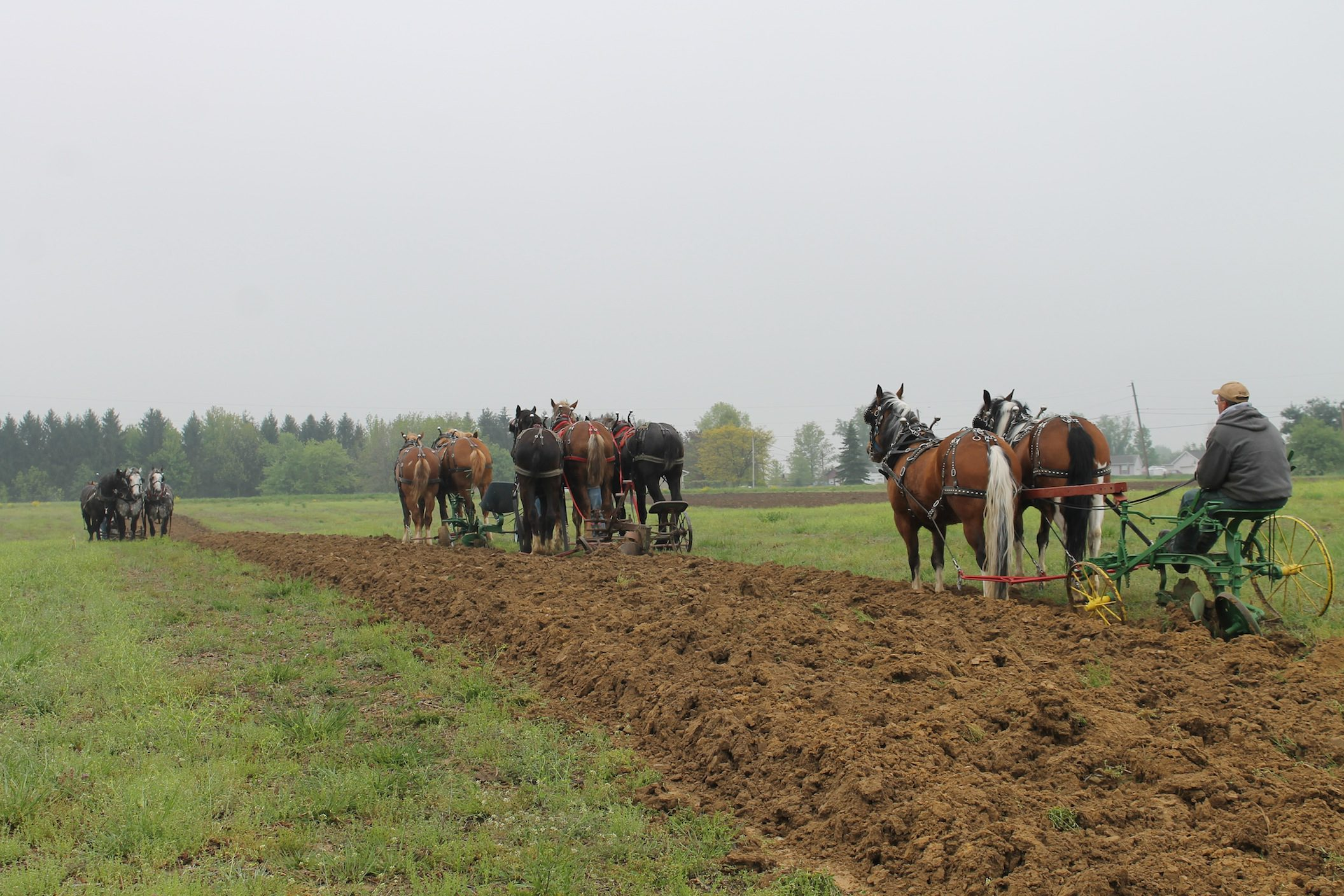 Auctions In Ohio >> Horse plowing at Rohrer Farm is a spring tradition - Farm and Dairy