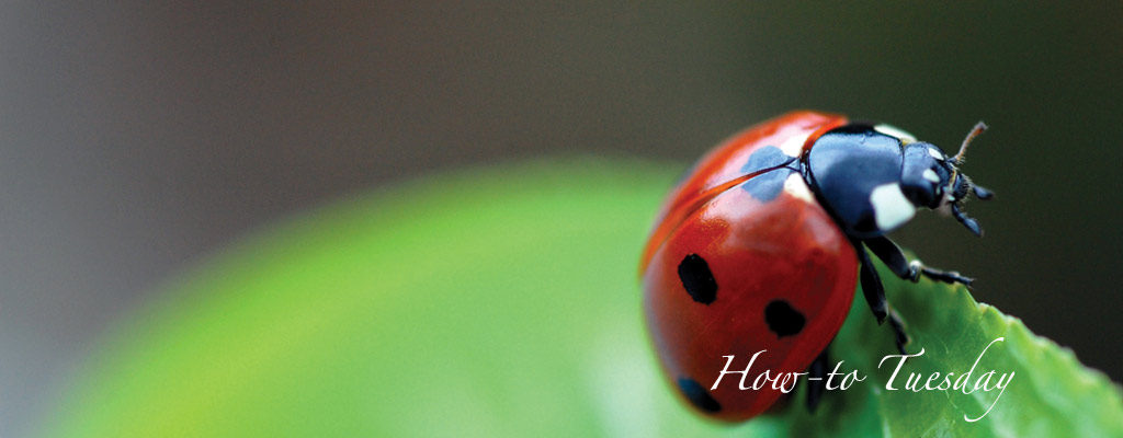 How to manage insects in the garden - Farm and Dairy