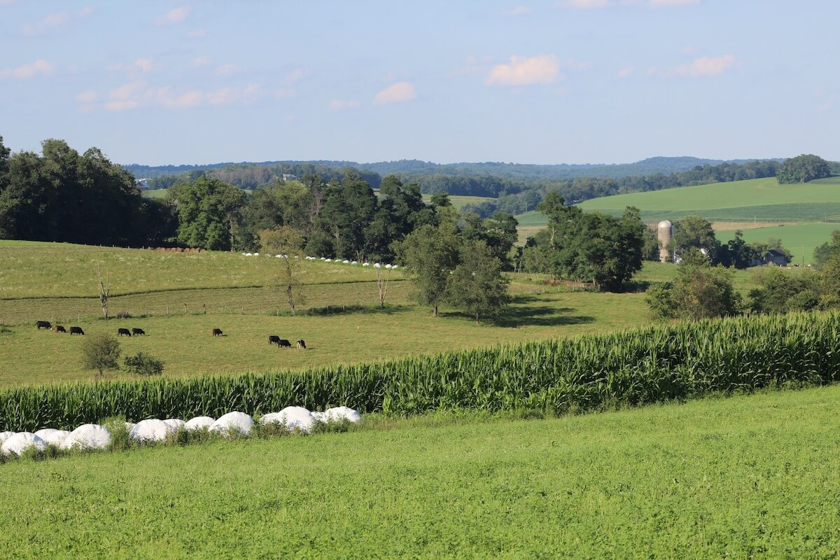 Auctions In Ohio >> Farmland values down across Corn Belt, but Ohio still increasing - Farm and Dairy