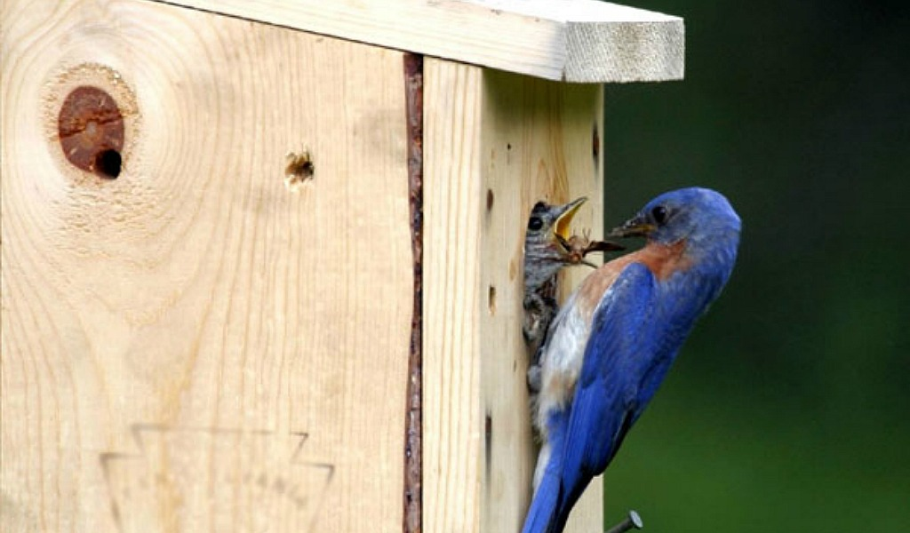 Get Those Nest Boxes Ready Birds Are Coming Farm And Dairy