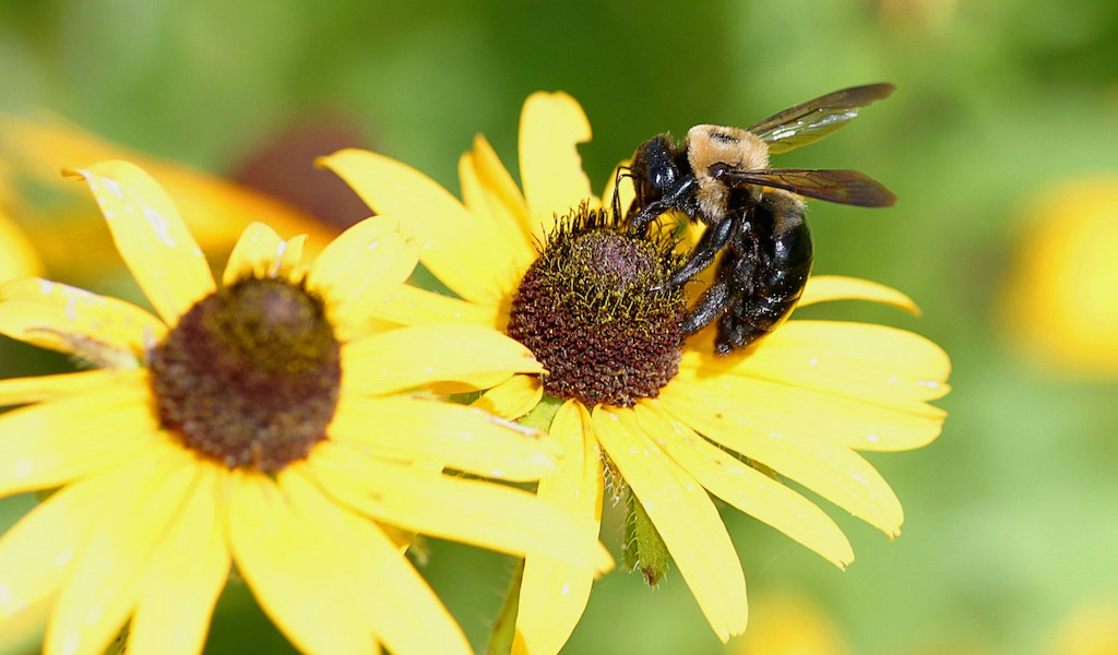 Auctions In Ohio >> Will removing neonics save the bees? - Farm and Dairy