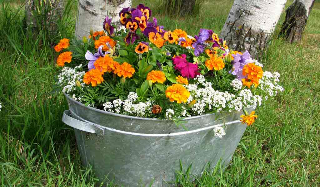 Good Galvanized Steel Tub Of Flowers