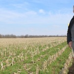 Cover crops and earth.