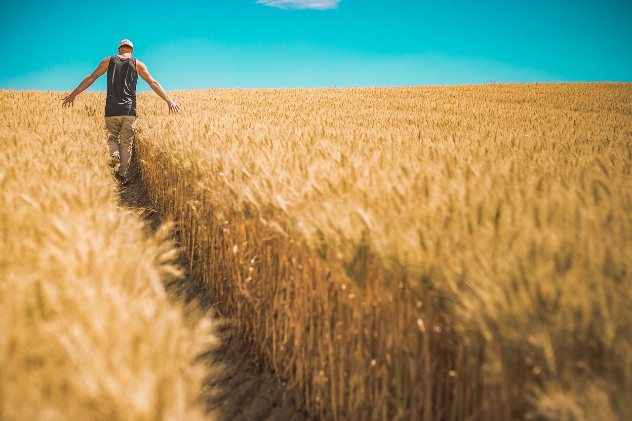 3 basics of crop insurance - Farm and Dairy