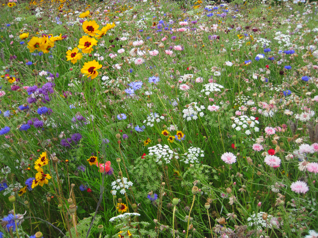 Auctions In Ohio >> How to plant a prairie garden - Farm and Dairy