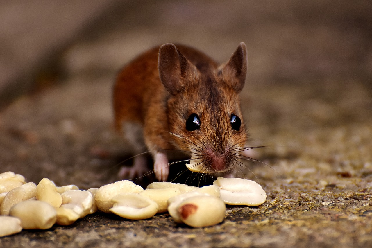 How to keep mice out of your house - Farm and Dairy