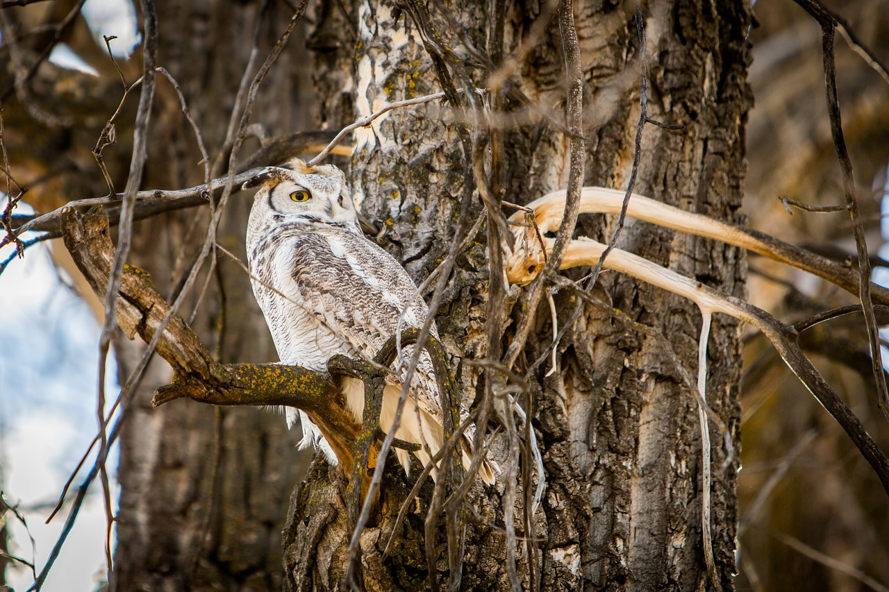 Curious naturalists love to find owl pellets - Farm and Dairy