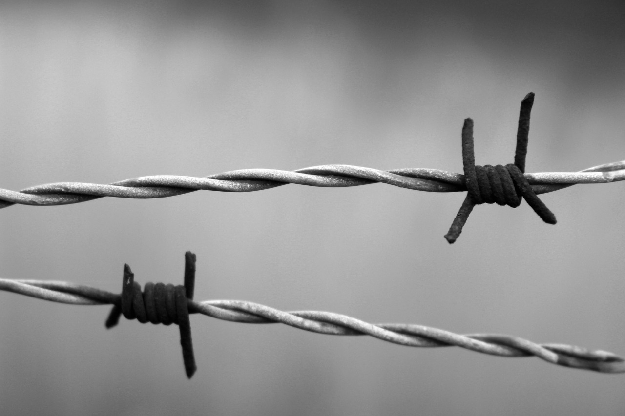 Barbed wire\'s history entangled in war - Farm and Dairy