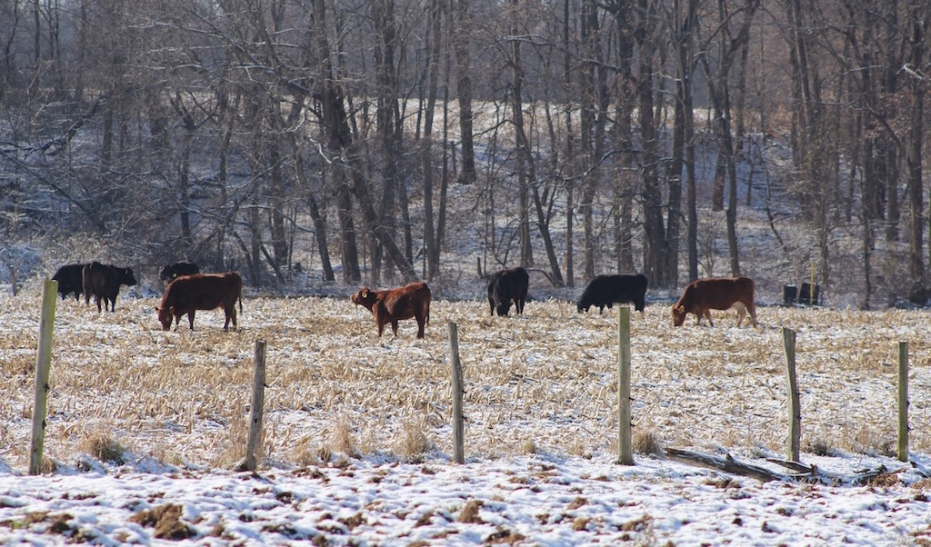 Beef Producers May Need Certification To Sell In 2019 Farm And Dairy