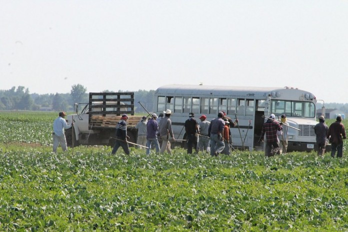 produce field workers