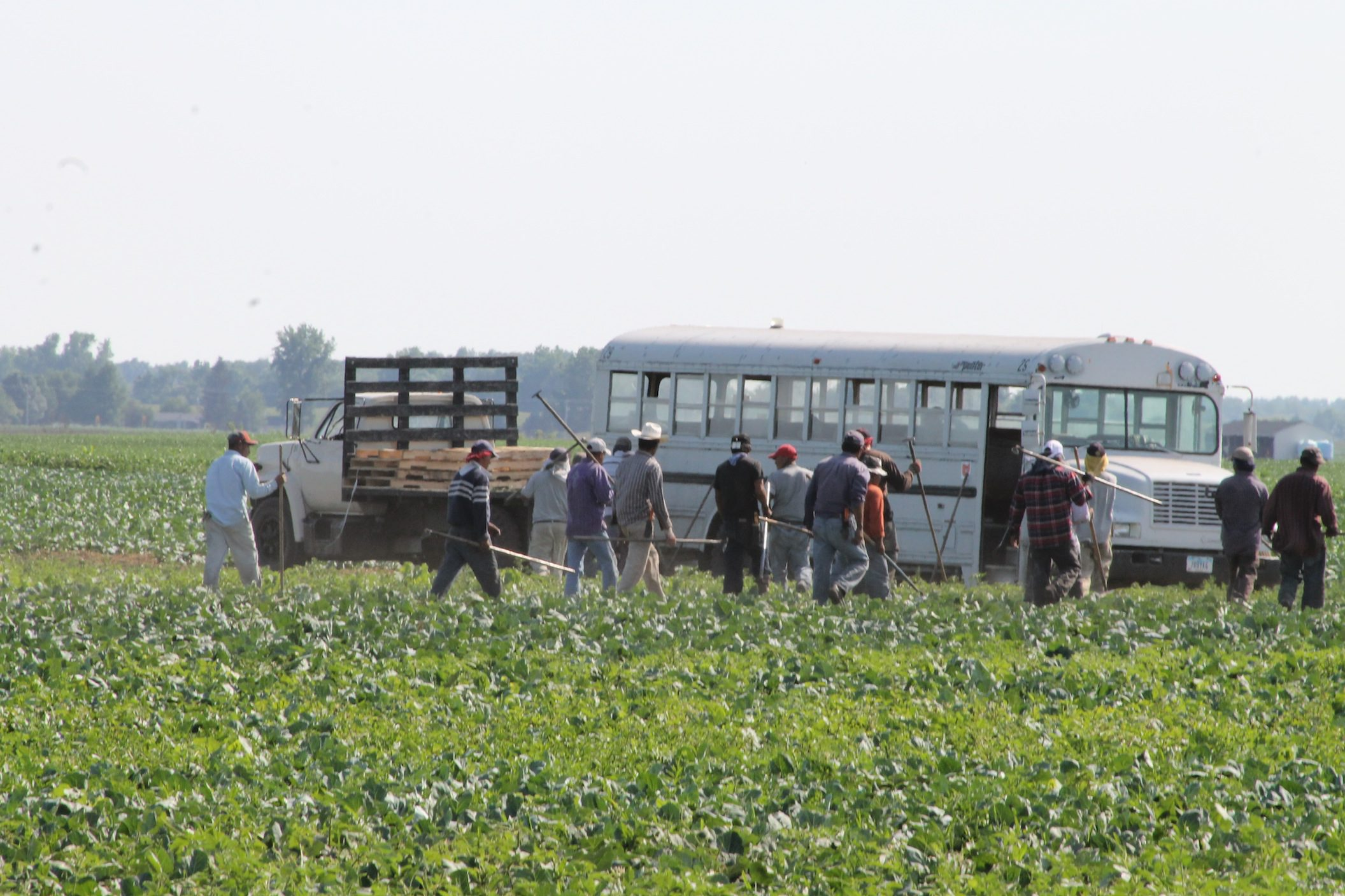 Immigrants working in field