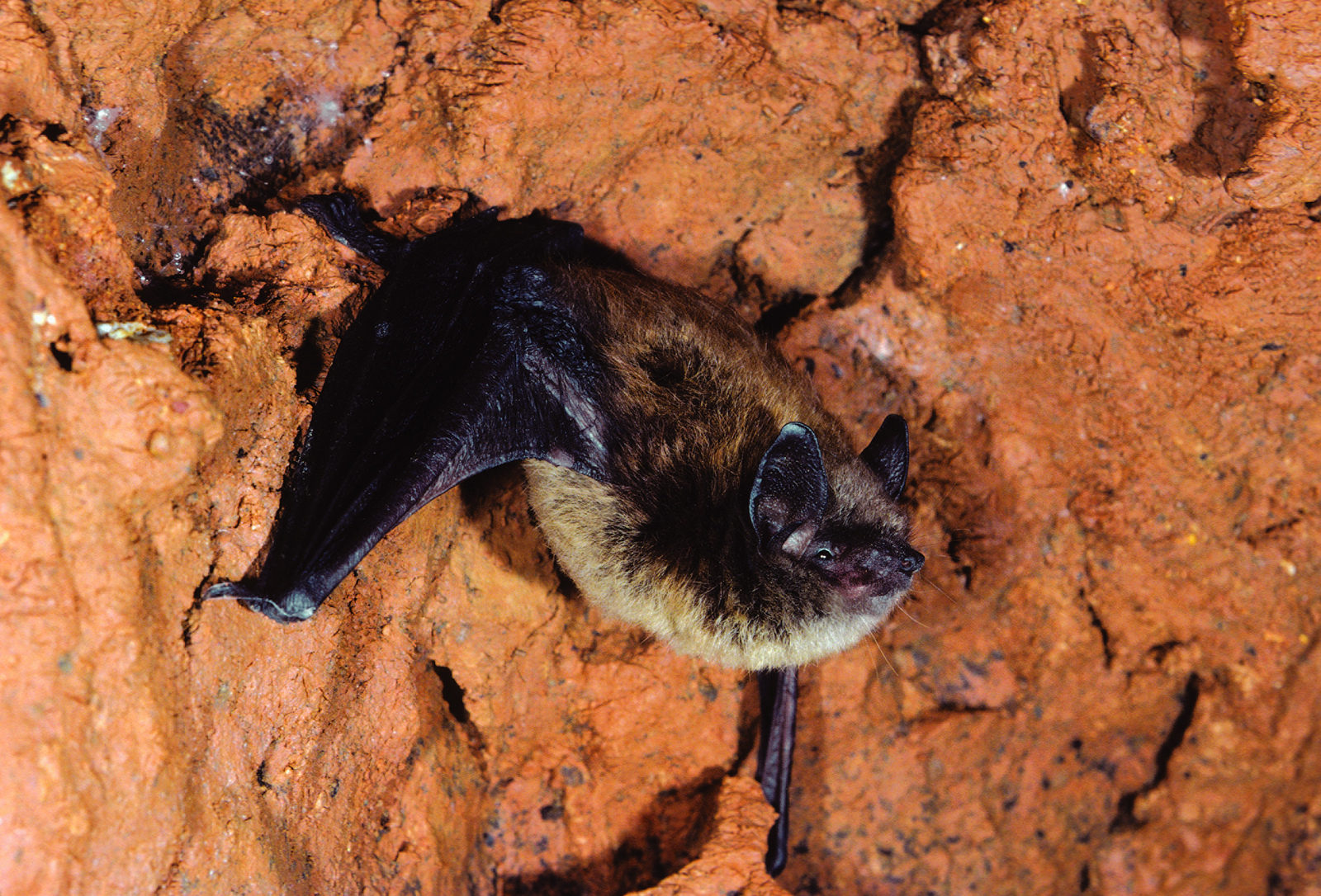 bats in shavers creek