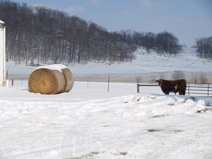 hay bale in snow