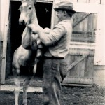 Vintage farm photo, foal