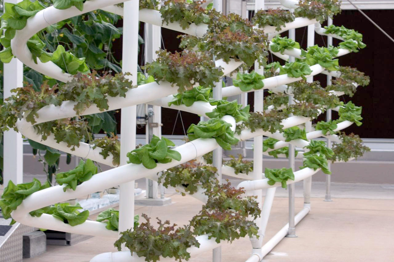 Researcher works on revolutionizing hydroponic plant growth to feed the masses