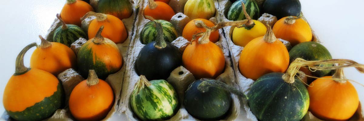 Prolong The Life Of Decorative Pumpkins Gourds And Squash In Five