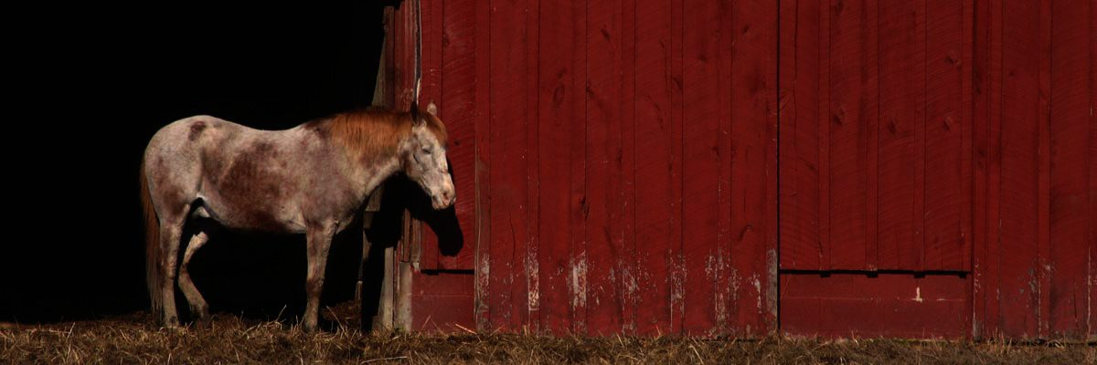horse by red barn