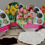 Easy Bloom Pads