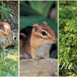 wildlife pests in the garden