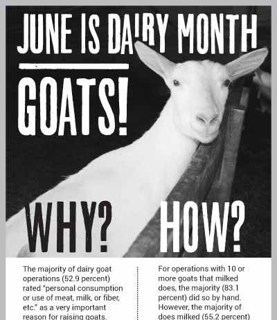 Dairy Goats infographic