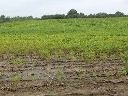 Wet soybeans