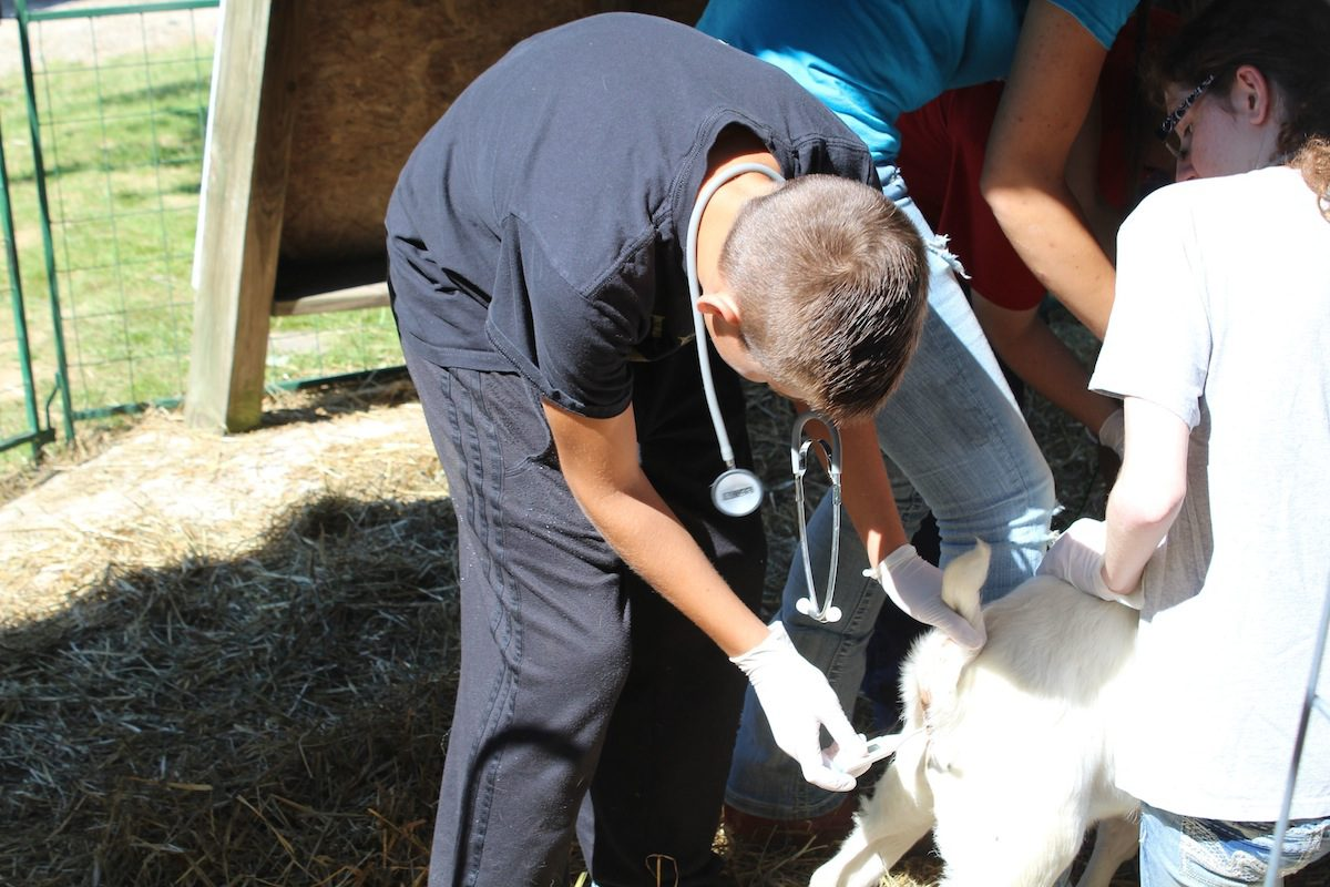 TV vet tells real-life story of working with farm animals ...
