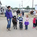 Mini-horse at Portage County Fair