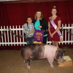 Lawrence Co. grand champion hog