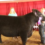 Lawrence Co. grand champion steer