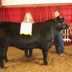 Lawrence Co. reserve champion steer