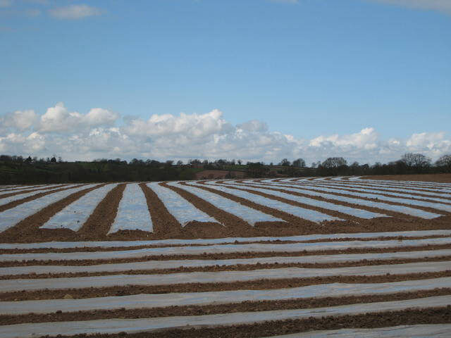 cold hardy crops