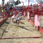 Geauga fair pig races