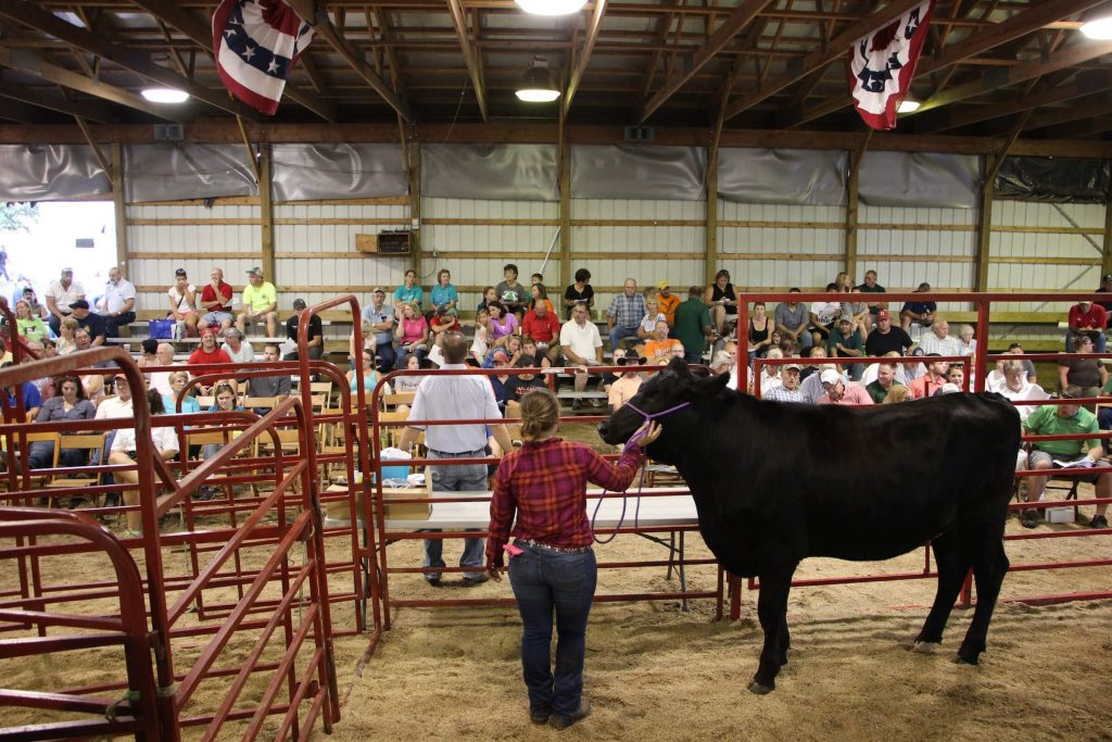 Stark County Fair livestock auction