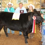 Canfield Fair reserve champion steer