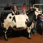 Tusc. Co. Rs Ch Dairy steer