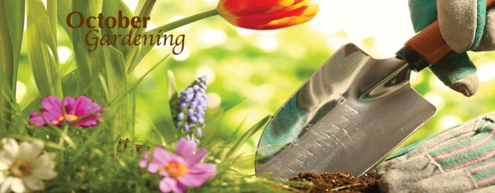 flowers and trowel