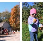 apple orchard, toddler picking apples and ear of corn on stalk