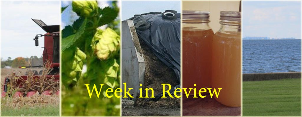 Week in Review 10/24 collage