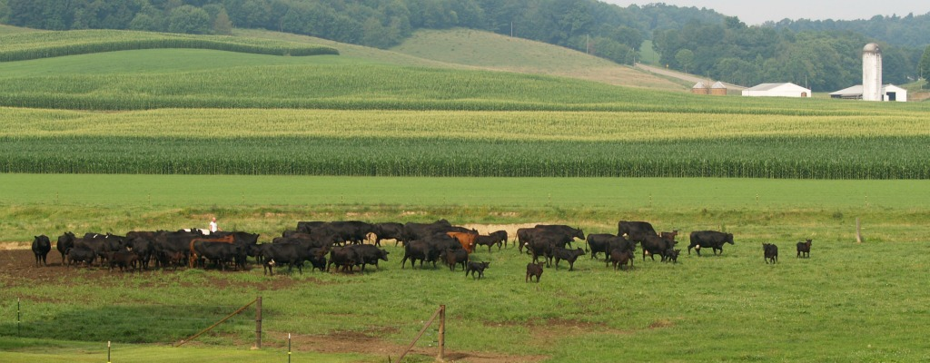 Preserve mandatory country-of-origin labeling - Farm and Dairy