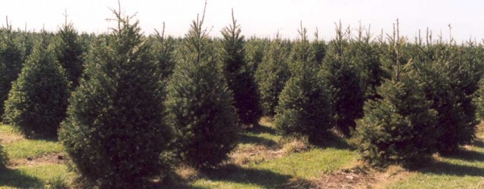 Operation Evergreen sends Ohio-grown Christmas trees to