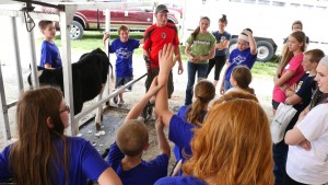 Volunteers at DairyPalooza demonstrate to 4-H youth how to properly fit dairy cattle for showing at their local county fairs. Children can watch a demonstration on clipping techniques and then try it out for themselves.