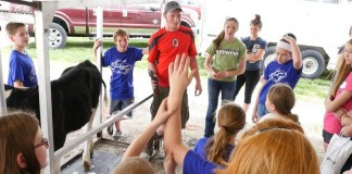 DairyPalooza cow clipping