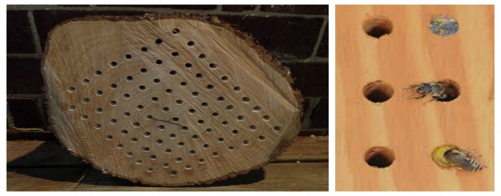 native bee box and bees