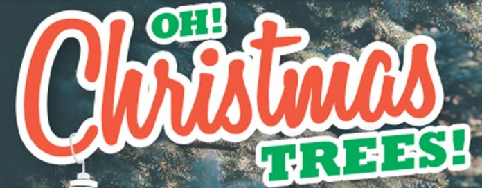 Christmas trees header