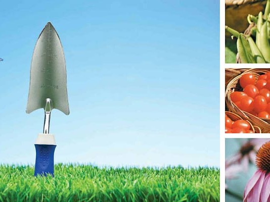 garden tools, green beans, cherry tomatoes and purple coneflowers