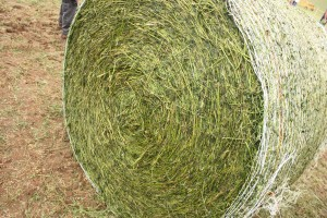 wrapped hay bale.JPG