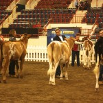 farm show showmanship