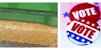 corn and voter button