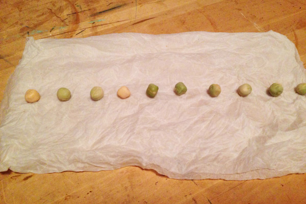 pea seed germination test collage